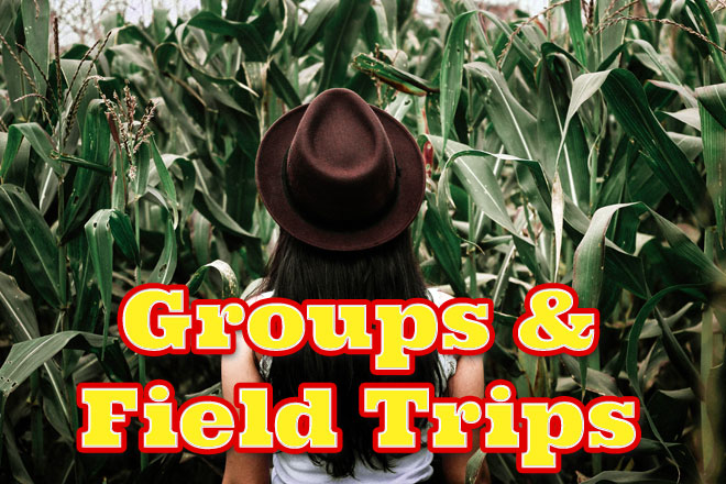 Groups and field trips